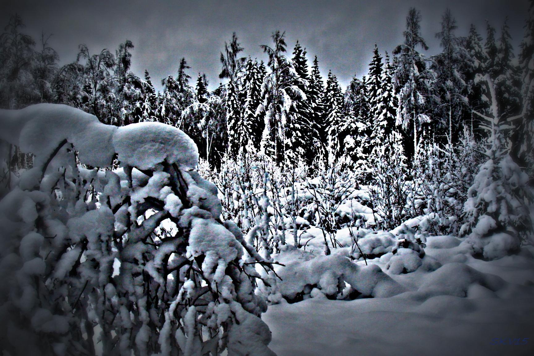 Kaikkialla lunta: Urjala marraskuu 2017