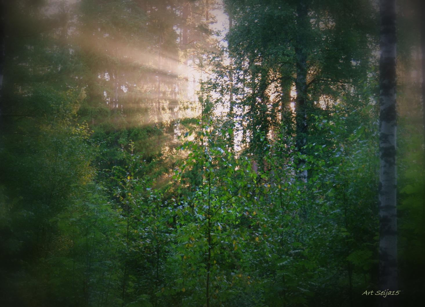 Metsää Lahmajärvellä, Urjala