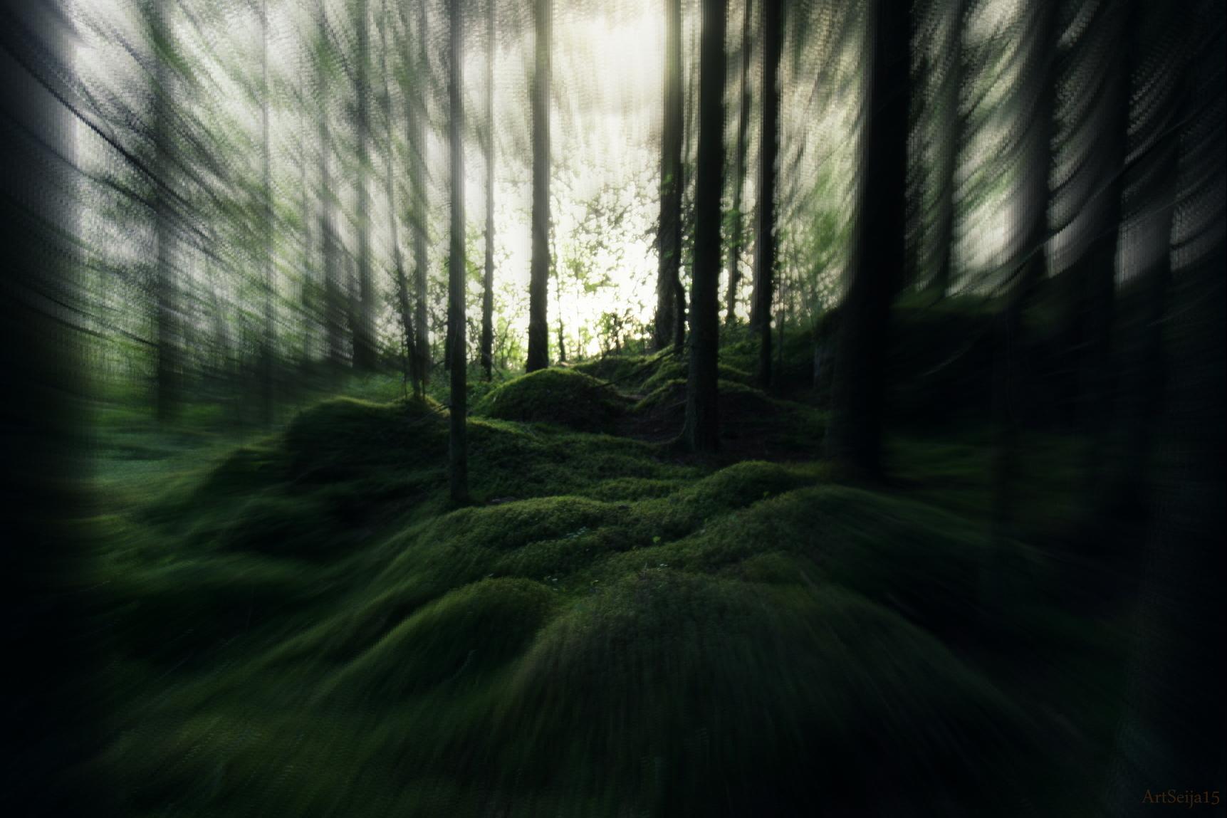 Metsän kuva: Lahmajärvi, Urjala